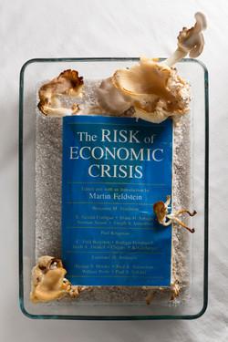 Financial Crisis Mycoremediation - sculpture