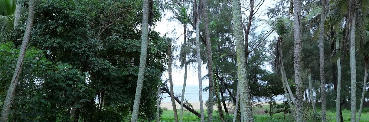 AyurMarmam Kerala