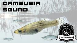 Gambusia Squad