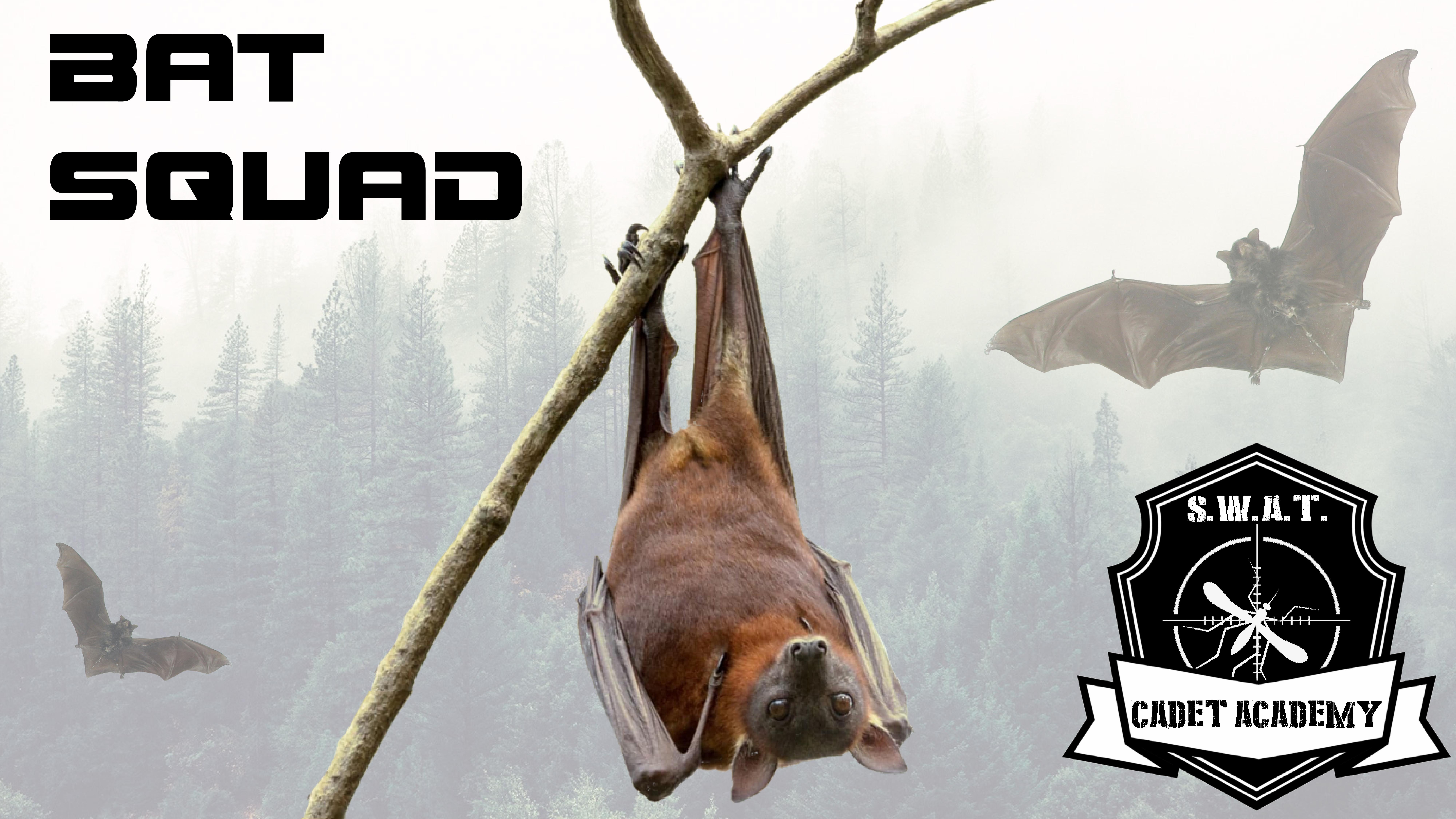 Bat Squad