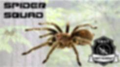 Spider Squad.jpg