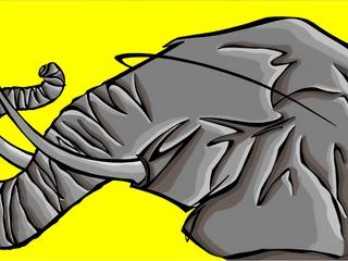 WILD-REDPALN-ELEPHANT
