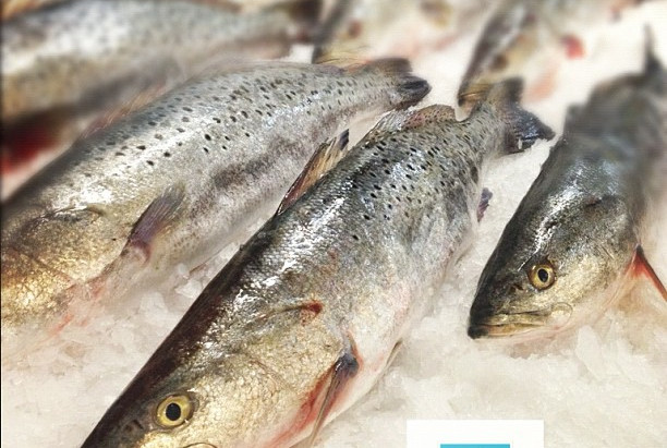 Weekly Spotlight: Local Speckled Trout & Grouper