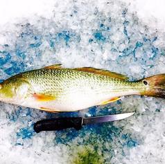 Farm Raised Redfish