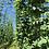 Thumbnail: SIPROPLANT® 10l Pflanzenstärkungsmittel auf Siliziumbasis