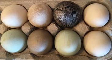 Heirloom Duck Eggs