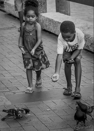 feeding-the-birds_7622590016_o_smugmug-1.jpg