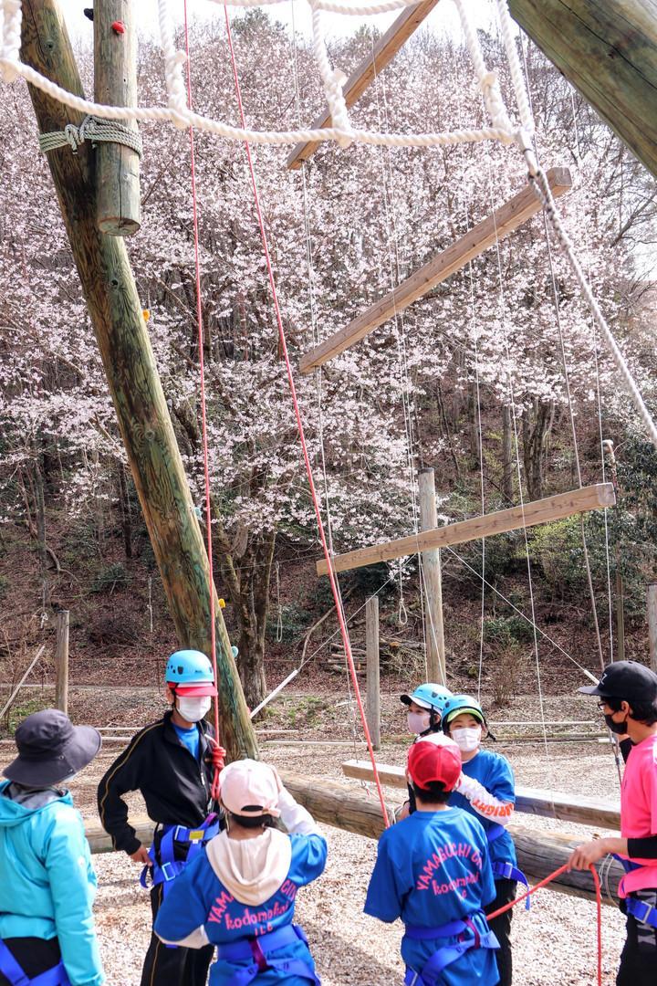 Jタワーと桜.jpg