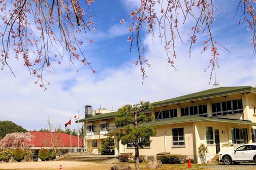 桜と所.jpg
