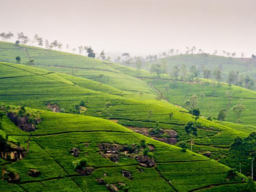 Where in the World: Sri Lanka