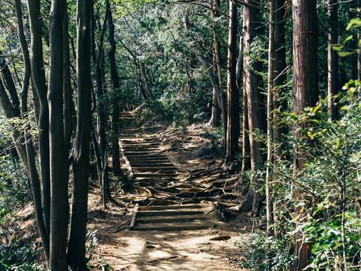 Hike Through History at Mt. Takao