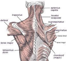 Pain Between The Shoulder Blades? Here's What Might Be Going On!