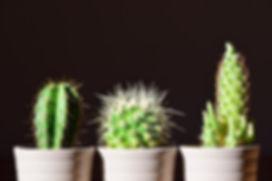 cactus-2117102_960_720.jpg
