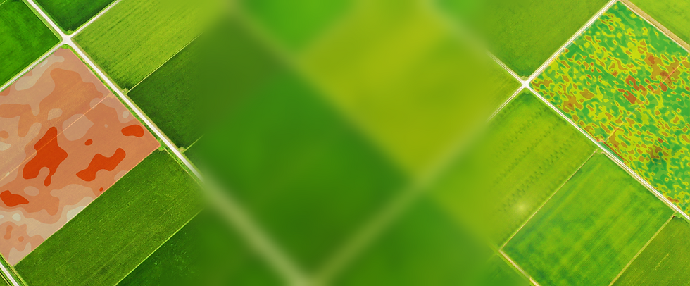 newprofitagbanner2.png