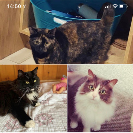 A local family has three cats searching for a new home