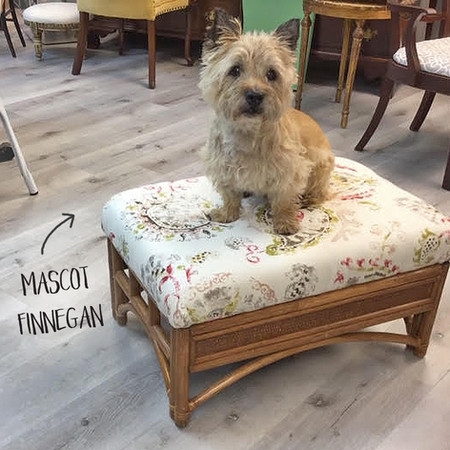 Eclectic Style Shop Dog Finnegan!