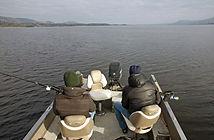 Dood aas vissen in Ierland
