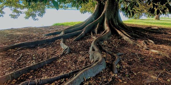 root1.jpg