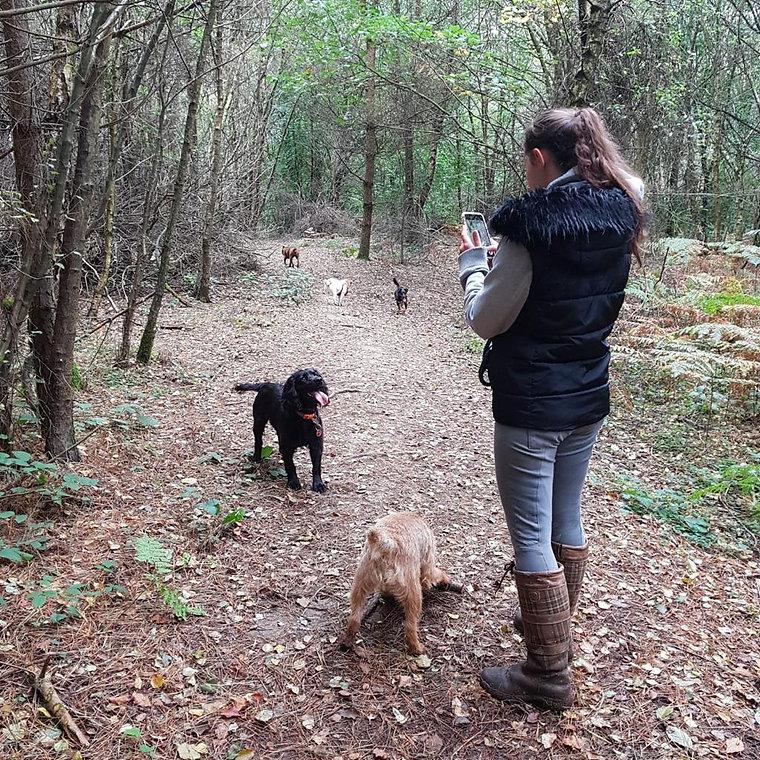 Dog Walker, Pet Services, Dog Day Care, Dog Walking Service