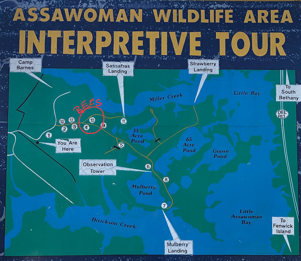 Park map for Assawoman Wildlife Area
