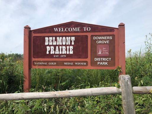 A Bee Safari at Beautiful Belmont Prairie, Illinois