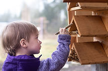 A young girl placing mason bee nest tubes