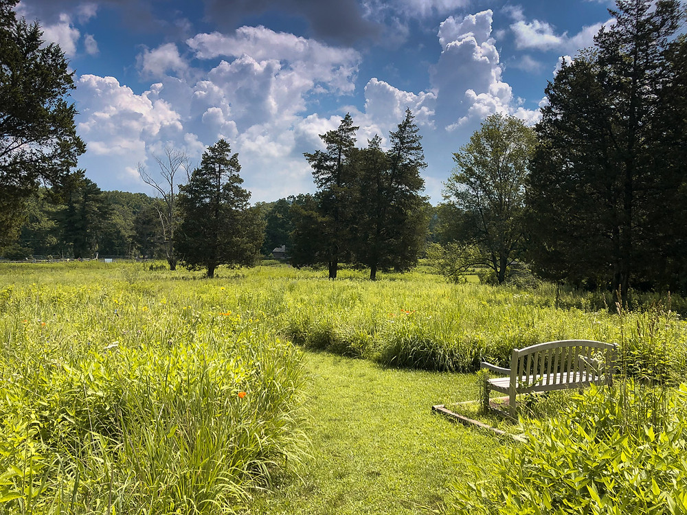 An empty bench looking out over a large wildflower meadow