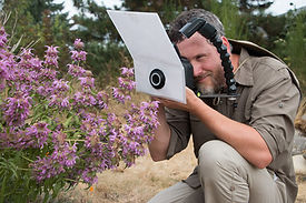 Joe Dlugo photographing bees on mountain mint flowers
