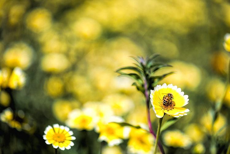 spring-1100475_1280.jpg