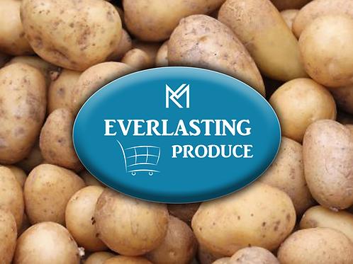 Everlasting Potato (LARGE)