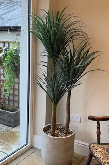 SK202 Artificial Yukka Plant Display With Large Pot 180cm H x 90cm W x 90cm D