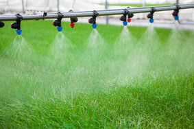 Greenhouse watering system in action.jpg