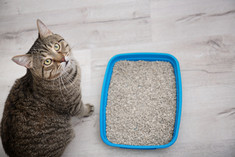 Adorable cat near litter tray indoors. P