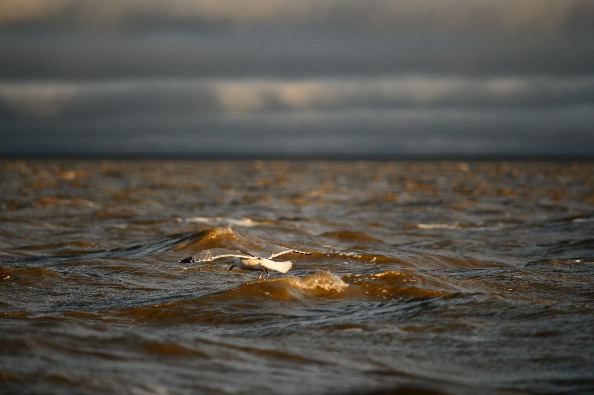 Восточно-Сибирское море встретило