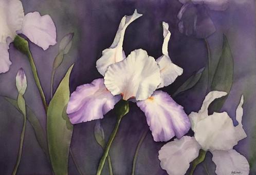 Iris Garden_1