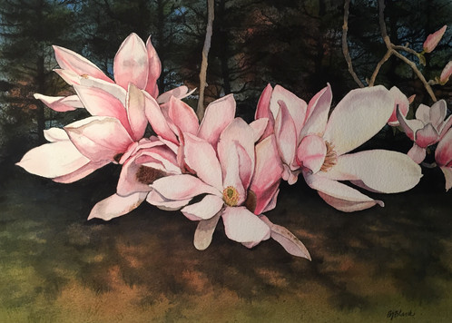 Magnolias in the Sun_1