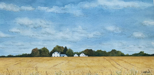 Colebrook Road Wheat Fields_1
