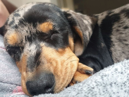 Banish their Boredom (dogs)