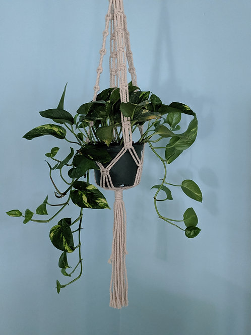 Knotted Links Plant Hanger