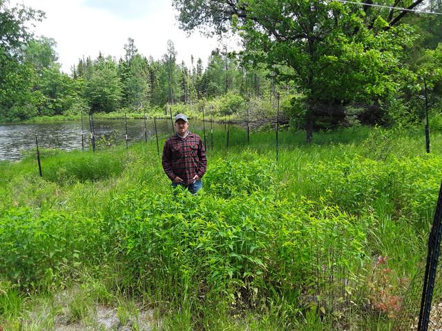 Shoreline Restorations