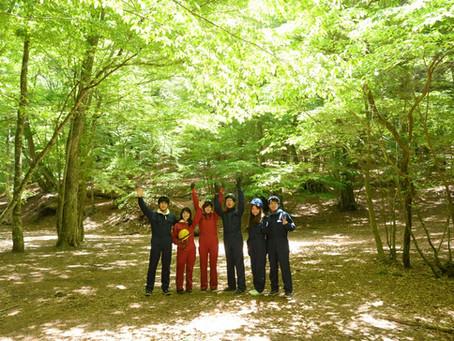 新緑の季節!青木ヶ原樹海🌿