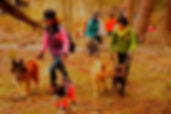 DSC_2147_preview_edited_edited_edited.jp