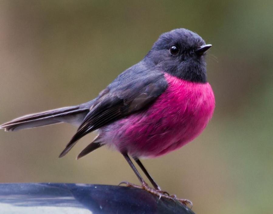 Dellarae Brakespeare, Pink Feathers, 201