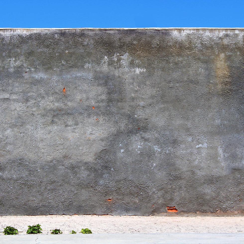 WALL ROBIN.jpg