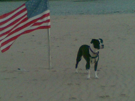 4th of July Fun with Your Pet, SAFELY