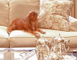 Dog_Big room IMG_2220_HDR