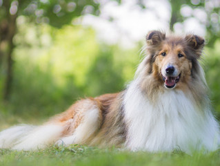 "The Problem With ""Lassie Syndrome"""