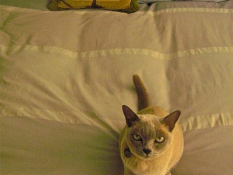 Kitty and the Guest Bed