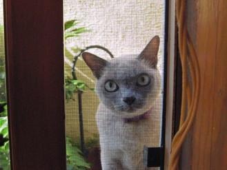 Kitty Wants In