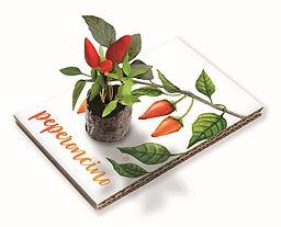 Cartolina Peperoncino